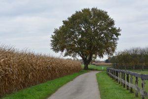 Du skulle selv prøve træbeskæring - det får træerne til at se pæne ud!